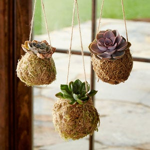 Succulent Kokedama Hanging String Gardens, Set of 3