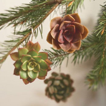 Succulent Ornaments - Set of 3