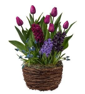 Purple Star Bulbs in Grapevine Basket