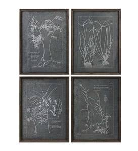 "Set of 4 ""Root Study"" Framed Tin Prints"