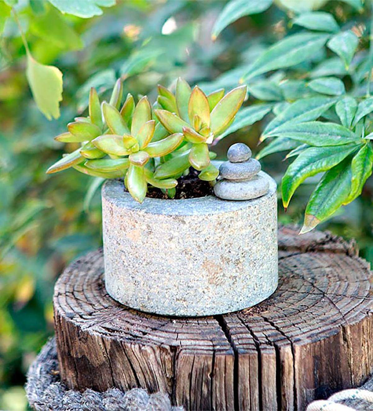 Riverstone Succulent Pot with Cairn
