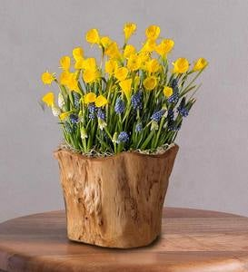 January Narcissus and Hyacinths Bulb in Root of the Earth Bowl