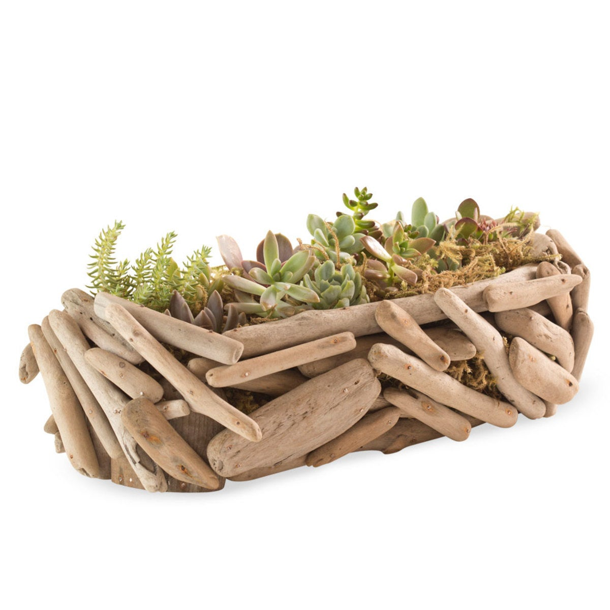 Driftwood Succulent Garden - Rectangle