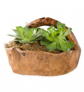 Root of the Earth Large Succulent Basket