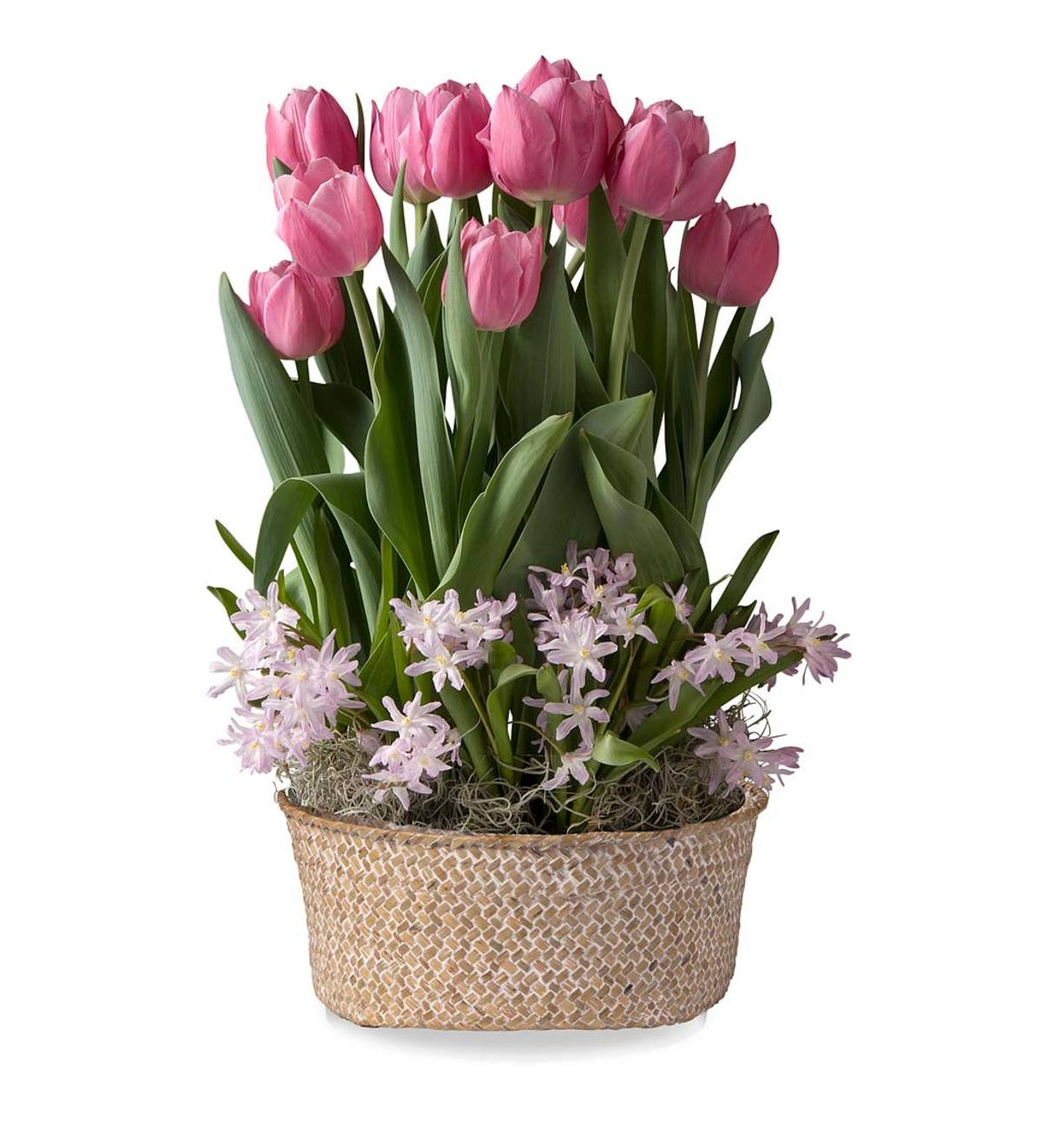 April Early Glory Tulips & Pink Giant Glory-of-the-Snow Delivery in Seagrass Basket