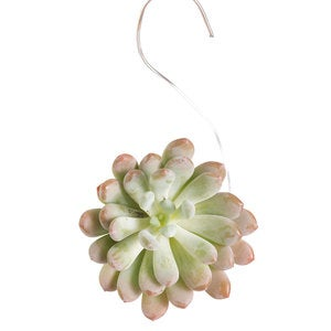 Succulent Ornaments