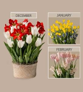 3 Months of Flower Bulb Deliveries & Seagrass Basket