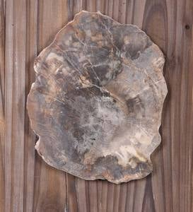 Petrified Wood and Rattan Wall Décor Set