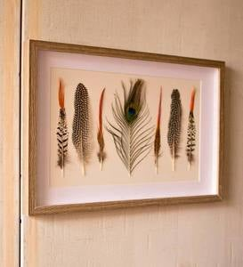 Framed Feathers Under Glass Wall Art