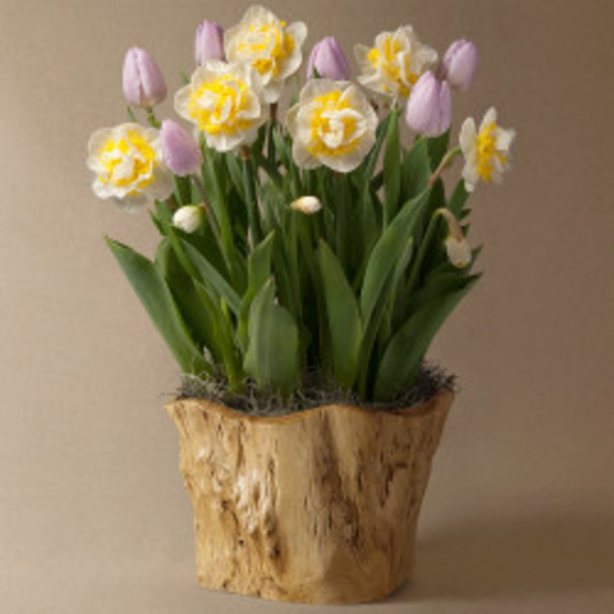 May Tulip & Narcissus Bulbs Delivery in Root Bowl
