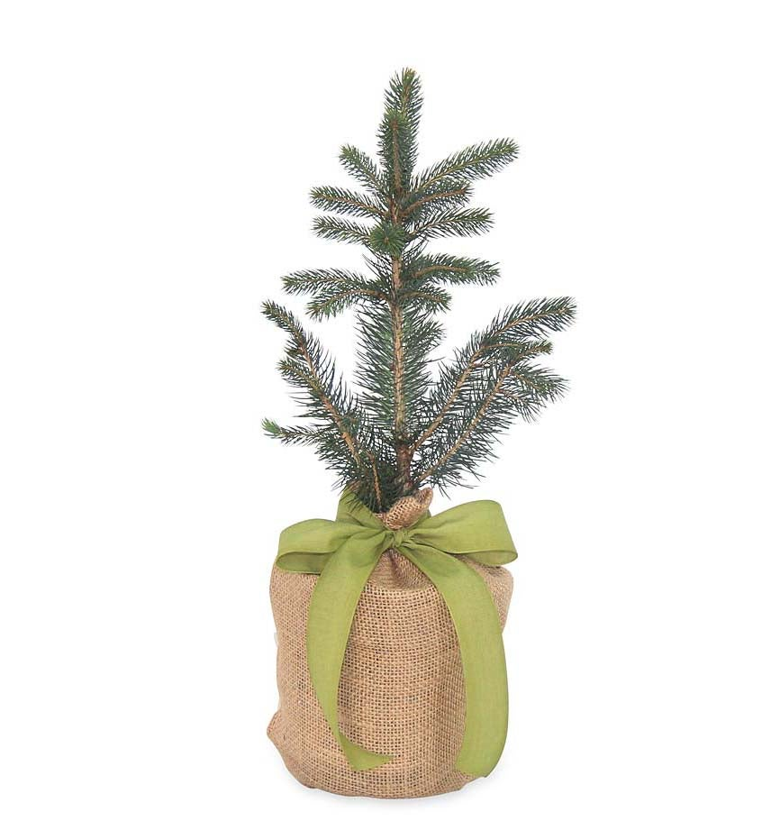 Live Potted Evergreen Trees in Burlap Gift Bag