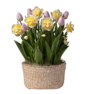 May Tulip & Narcissus Bulbs Delivery in Seagrass Basket