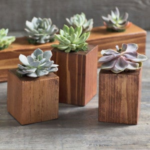 Cedar Succulent Holder, Set of 3