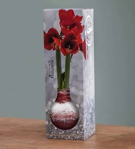 No-Water Wax Dipped Amaryllis Bulb - Gold