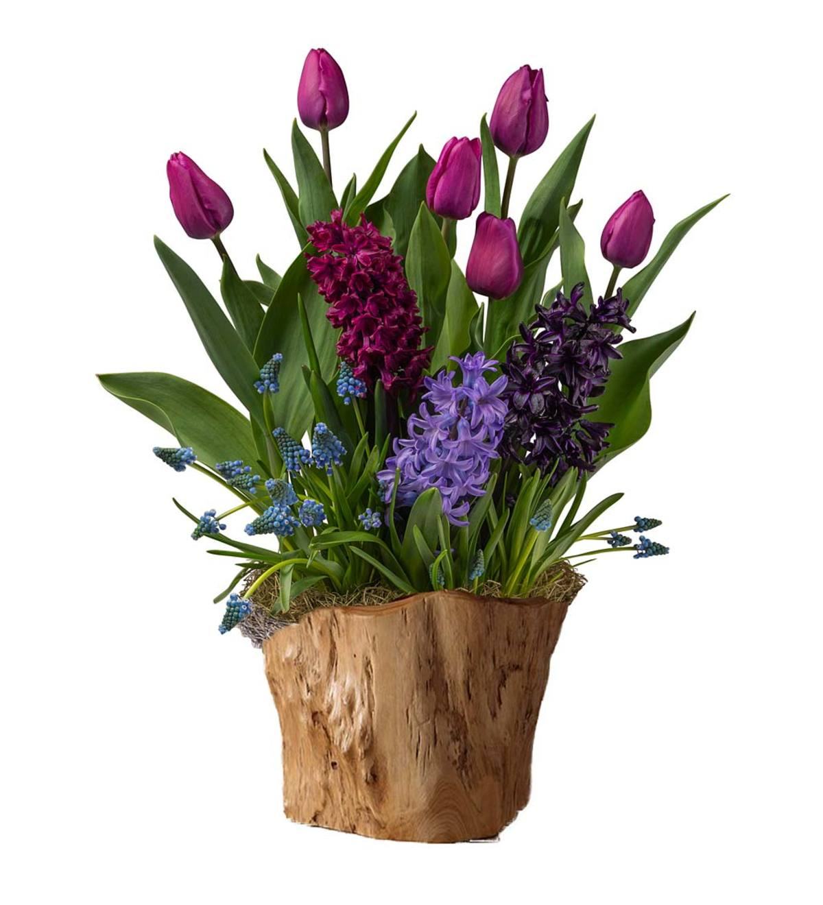 Purple Star Bulbs in Root Bowl Basket