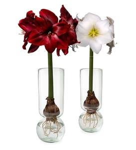 Recycled Glass Forcing Bulb Vase & Flower Bulb