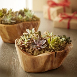 Succulent Garden in Root of the Earth Bowl